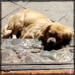 Puppies at Ollantaytambo © Tywatt 2014