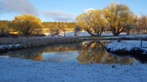 Snow at Pecos Pond © twyatt 2016